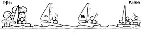 hipoxia2