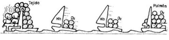 hipoxia5