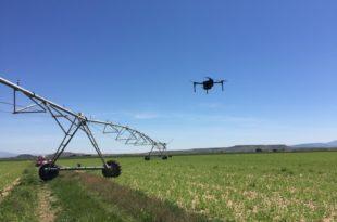 Teledetección Inteligencia artificial explotación agrícola